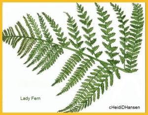 ladyfern1