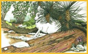 rabbitwoods